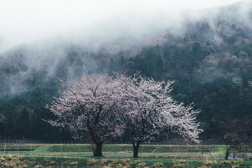 japanese-photographer-takashi-yasui-toky